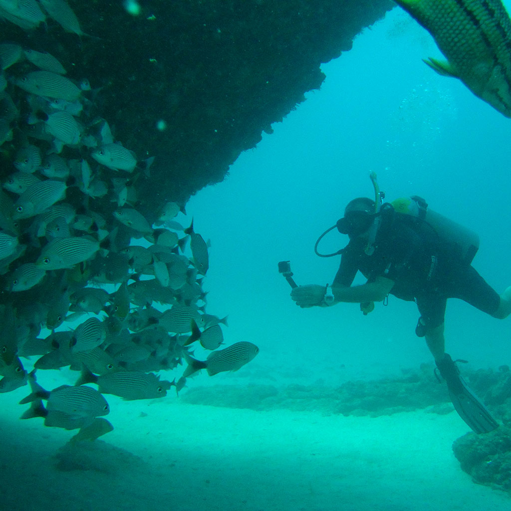 Scuba Diving Islas Marietas